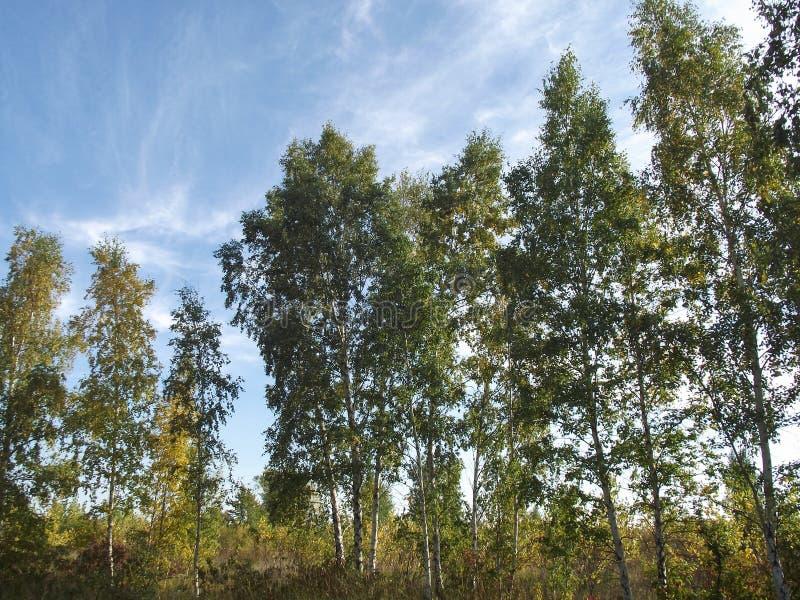 Parc naturel d'île de Toronto image libre de droits