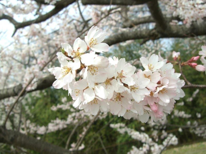 Parc naturel de fleur photographie stock libre de droits