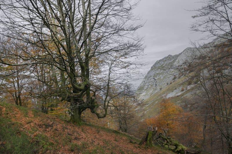 Parc naturel de Gorbeia en automne photos libres de droits