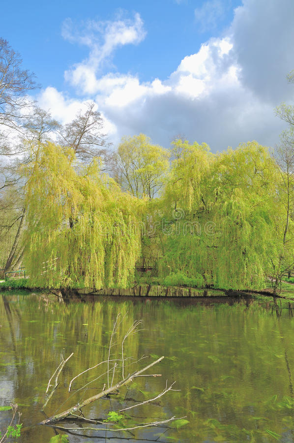 Parc naturel de Schwalm-Nette, Nettetal, Allemagne photo libre de droits