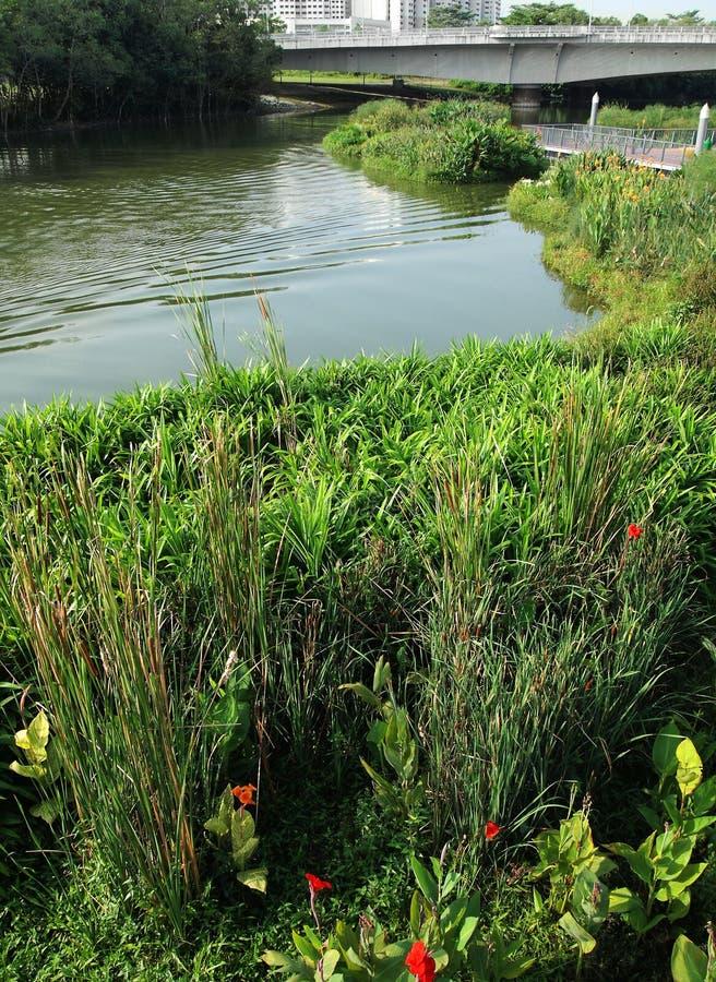 Parc naturel de zone humide dans la ville photo libre de droits
