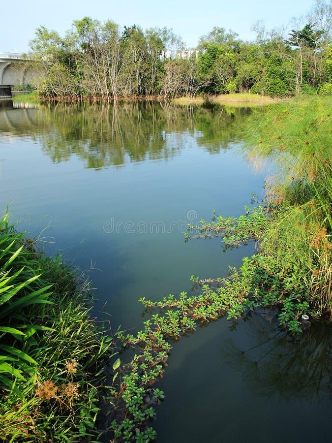 Parc naturel de zone humide dans la ville images stock