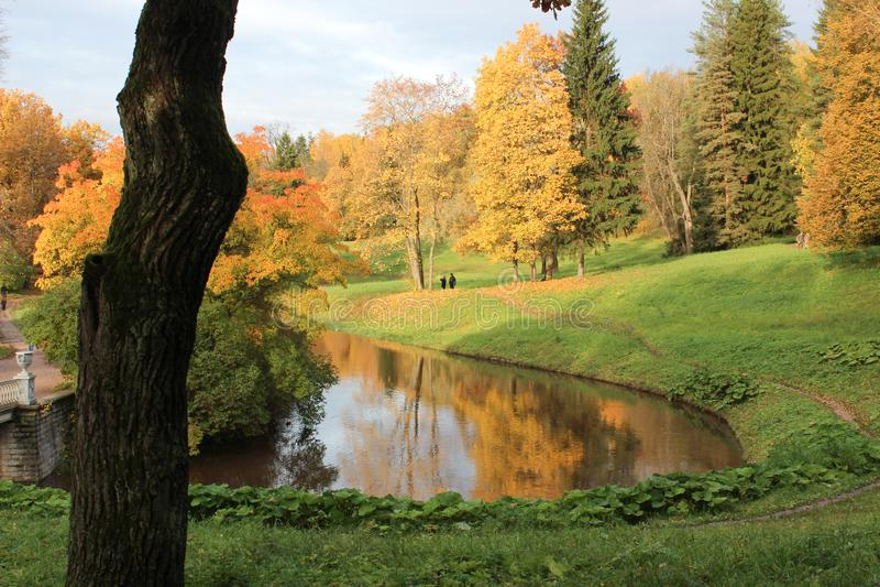 Parc noir d'arbre et d'automne photos stock
