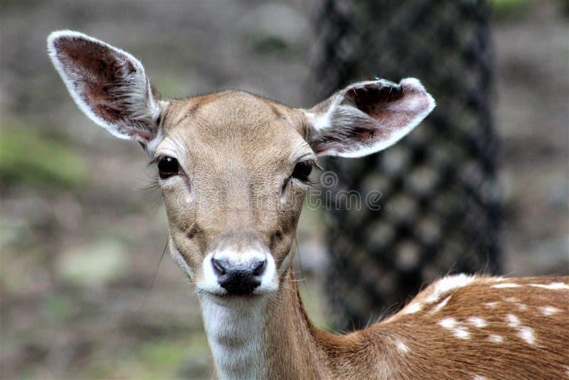 Parc-Park-Safari, Hemmingford, Quebec, Kanada lizenzfreie stockfotos
