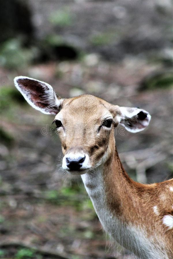 Parc parka safari, Hemmingford, Quebec, Kanada obrazy royalty free