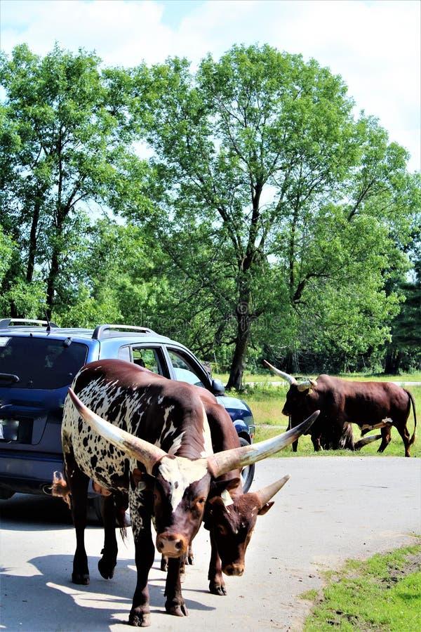 Parc parka safari, Hemmingford, Quebec, Kanada obraz stock