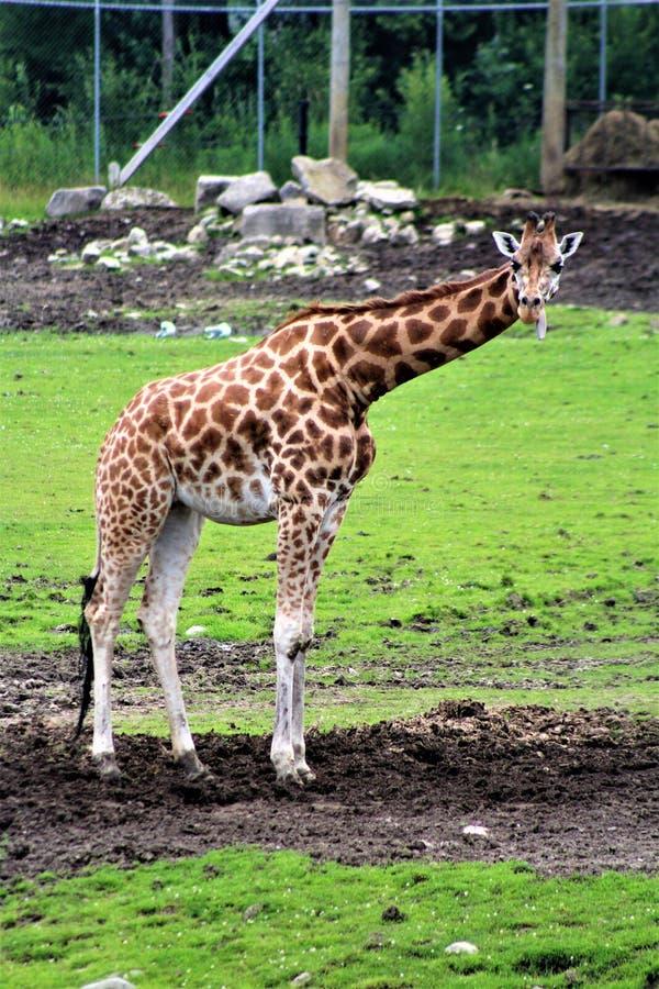 Parc parkerar safari, Hemmingford, Quebec, Kanada royaltyfri bild