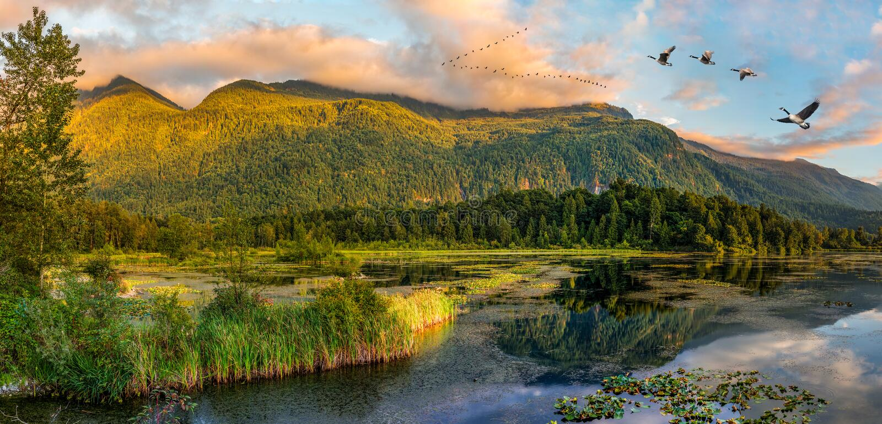 Parc régional de marécages de lac Cheam, Rosedale, Colombie-Britannique, C photographie stock