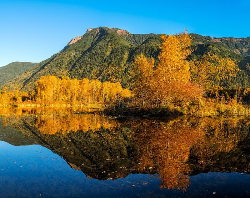 Parc régional de marécages de lac Cheam, Rosedale, Colombie-Britannique, C images stock