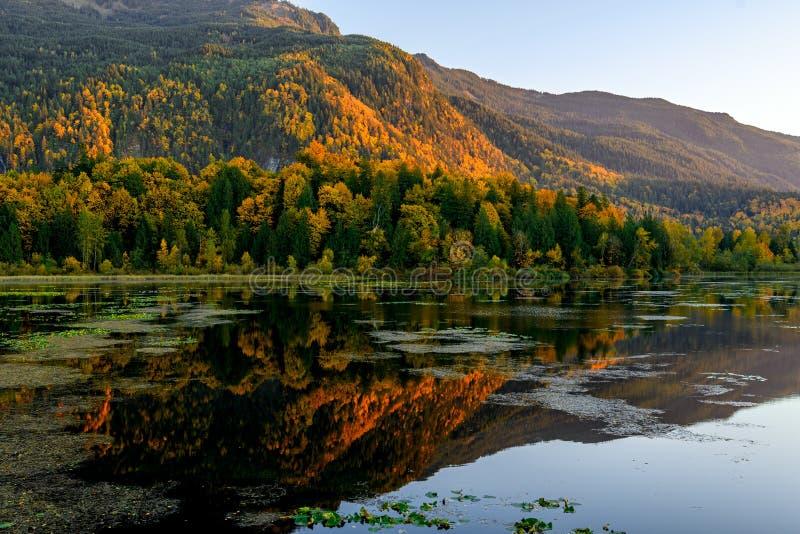 Parc régional de marécages de lac Cheam, Rosedale, Colombie-Britannique, C photo stock