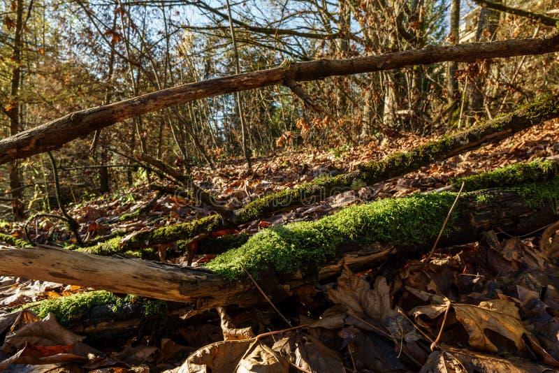 parc sauvage de montagne de Burnaby au jour ensoleillé d'automne photographie stock