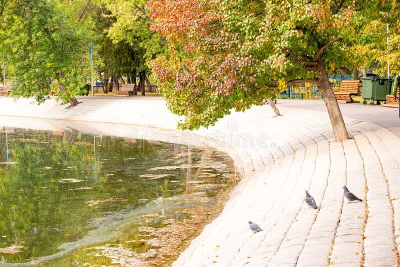 Parc urbain d'automne lumineux avec étang photographie stock libre de droits