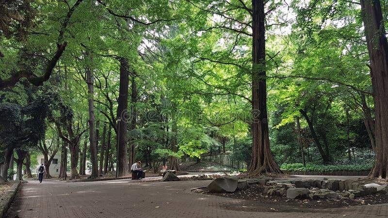 Parc verdâtre près de tour de Tokyo image libre de droits