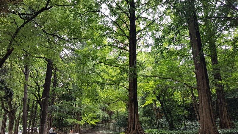 Parc verdâtre près de tour de Tokyo image stock