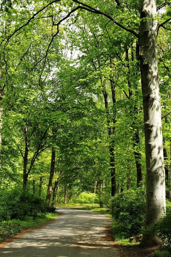 Parc vert à Berlin, Allemagne image libre de droits