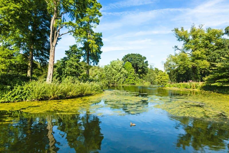 Parc vert luxuriant de région boisée se reflétant dans l'étang tranquille photographie stock libre de droits