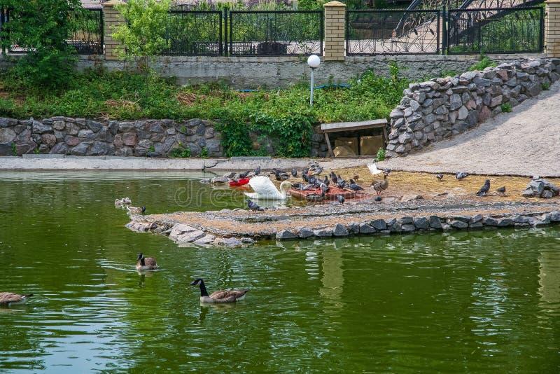Parc zoologique d'état de Kharkiv photo libre de droits