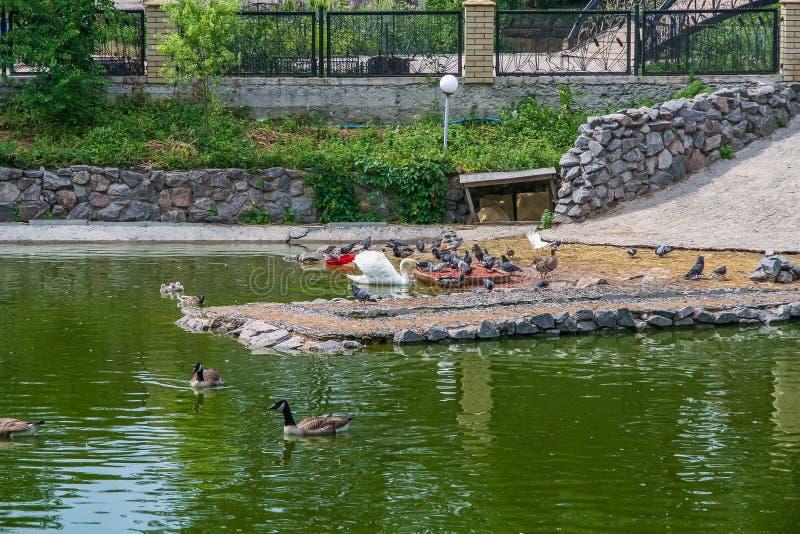 Parc zoologique d'état de Kharkiv photographie stock