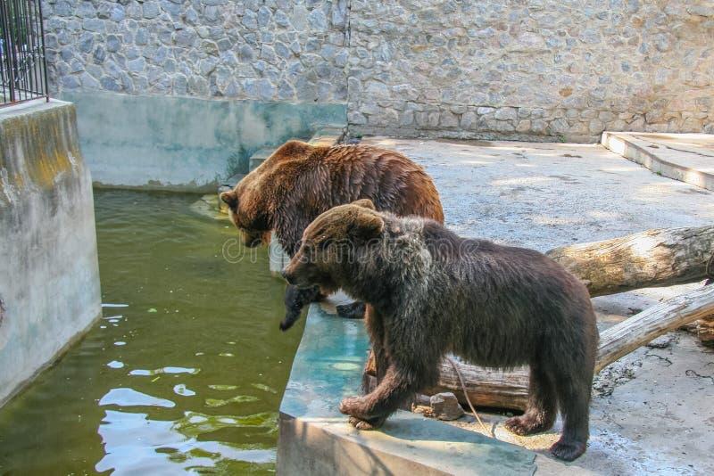Parc zoologique d'état de Kharkiv image stock