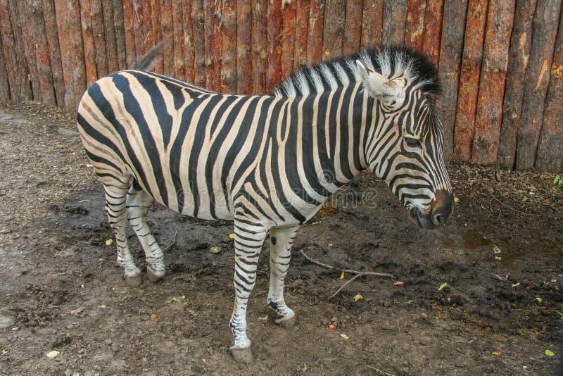 Parc zoologique d'état de Kharkiv images stock