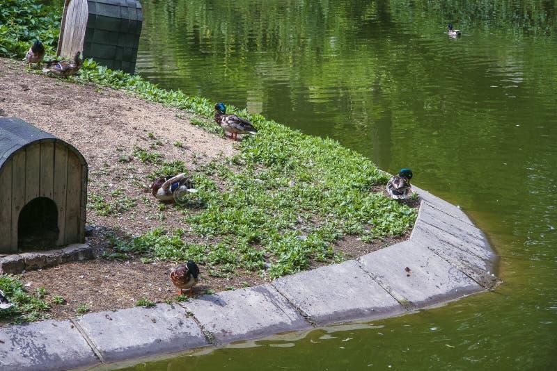 Parc zoologique d'état de Kharkiv photos libres de droits