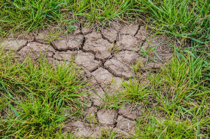 Parched brown earth with cracks on surface. And fresh green grass. Bad weather conditions and global climate problem royalty free stock image
