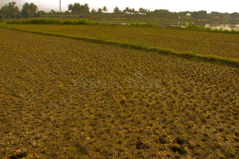 Parched Earth. Dry cracked earth and fields parched of water royalty free stock photography