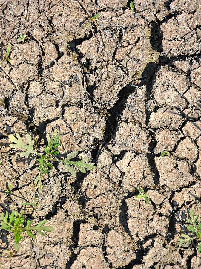 Parched earth in summer. Time royalty free stock images