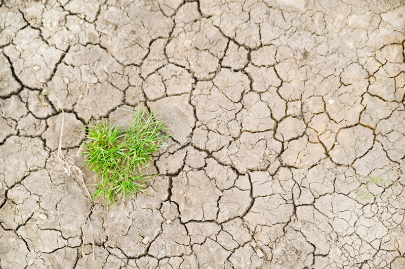 Download Parched ground stock image. Image of plant, cracked, erosion - 26640757