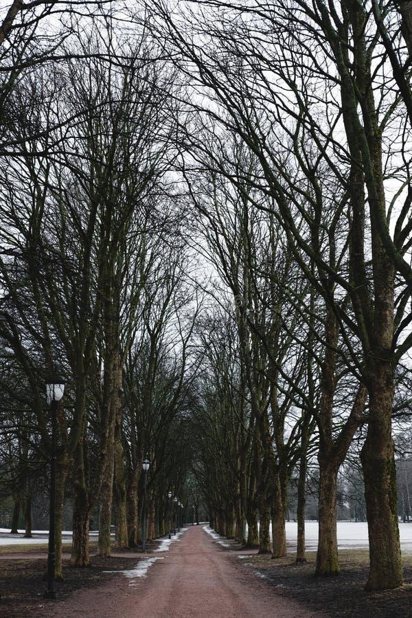 Parcheggi il sentiero per pedoni nell'inverno con gli alberi morti, mattina spettrale di mistero nell'inverno immagini stock libere da diritti