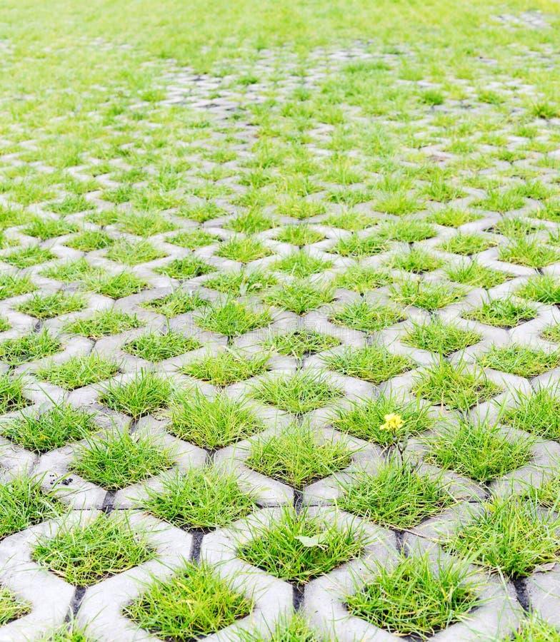 Parcheggio ecologico con l'erba verde immagini stock