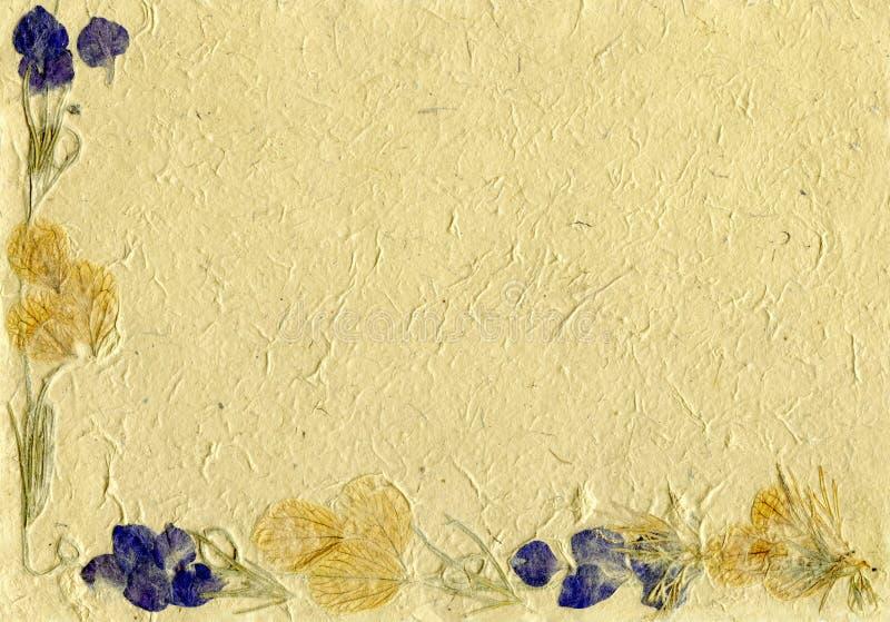 Parchemin floral images libres de droits
