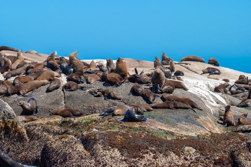 Parchi del cetaceo della foca del mare e riserve della Sudafrica fotografia stock libera da diritti