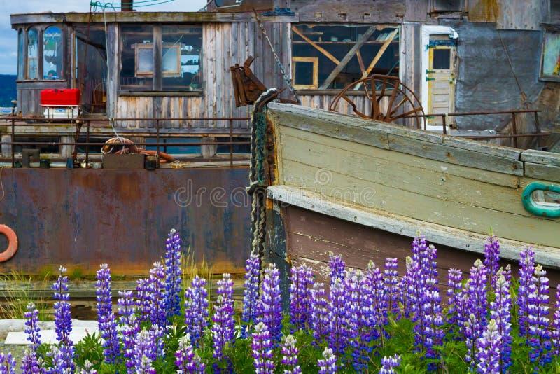 Parchi nazionali dell'Alaska fotografie stock