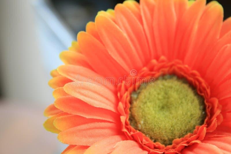 Parcial de la flor anaranjada de la margarita del Gerbera fotos de archivo libres de regalías