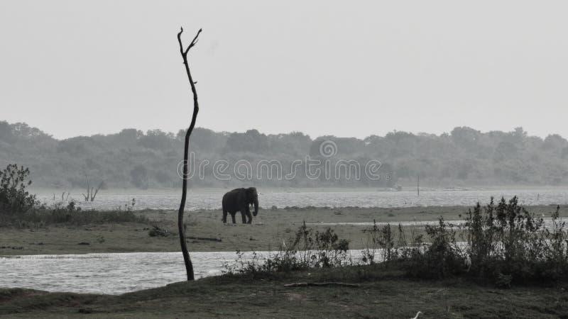 Parck del nacional de Udawalawa imagen de archivo
