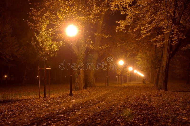 Parco alla notte. immagine stock libera da diritti