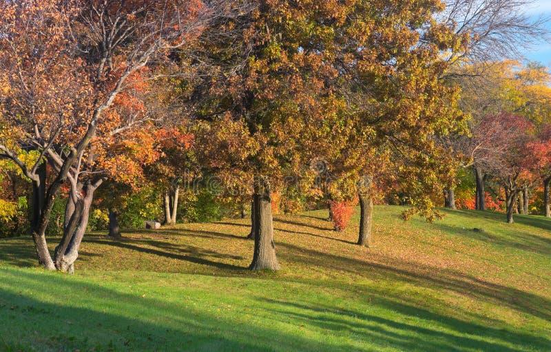 Parco Autumn Trees di Marthaler sulla sommità fotografia stock