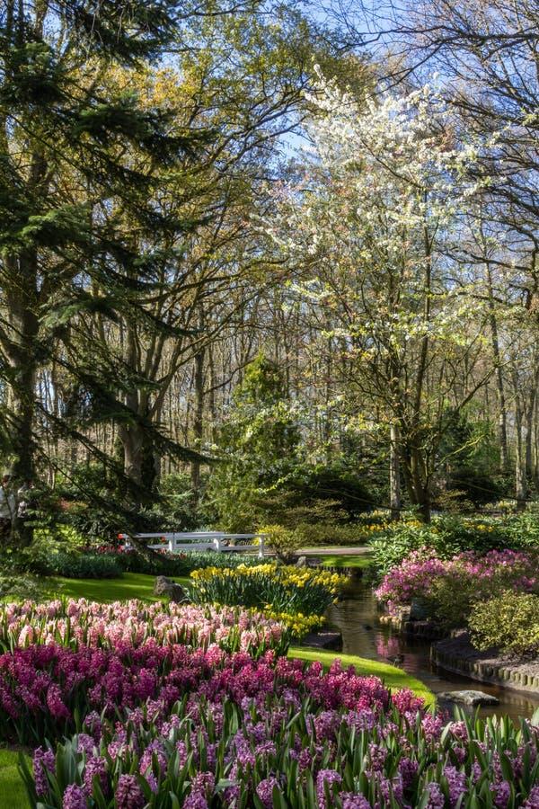 Parco con dei i fiori colorati multi della molla con la libbra immagine stock libera da diritti