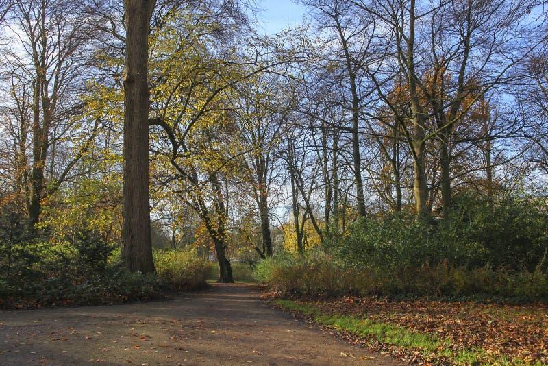 Parco con gli alberi variopinti in autunno fotografia stock