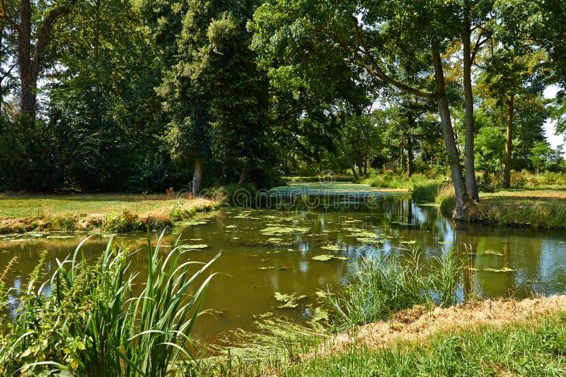 Parco con gli alberi verdi immagini stock