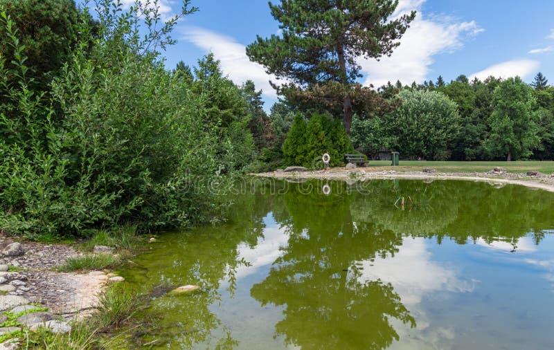 Parco con il lago 2 immagini stock libere da diritti