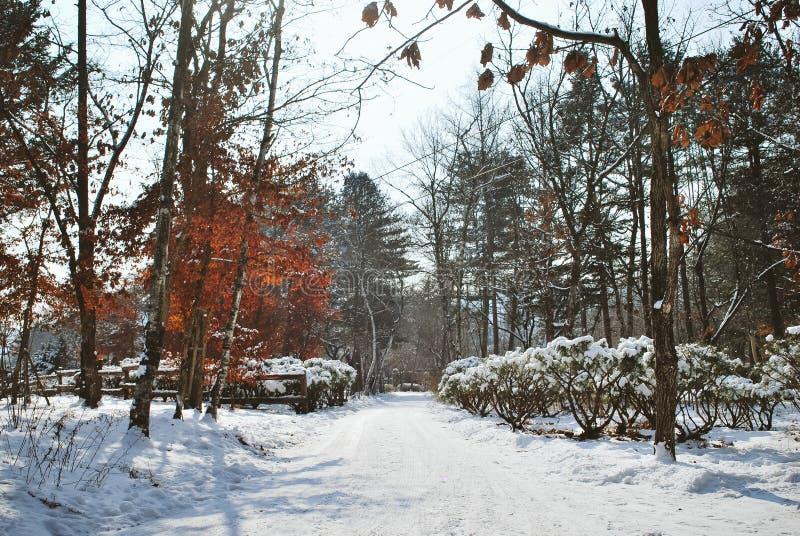 Parco coperto da neve durante l'inverno fotografie stock libere da diritti