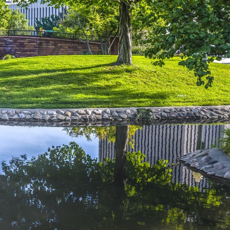 Parco dell'insenatura della città con gli alberi e la riflessione della costruzione fotografia stock