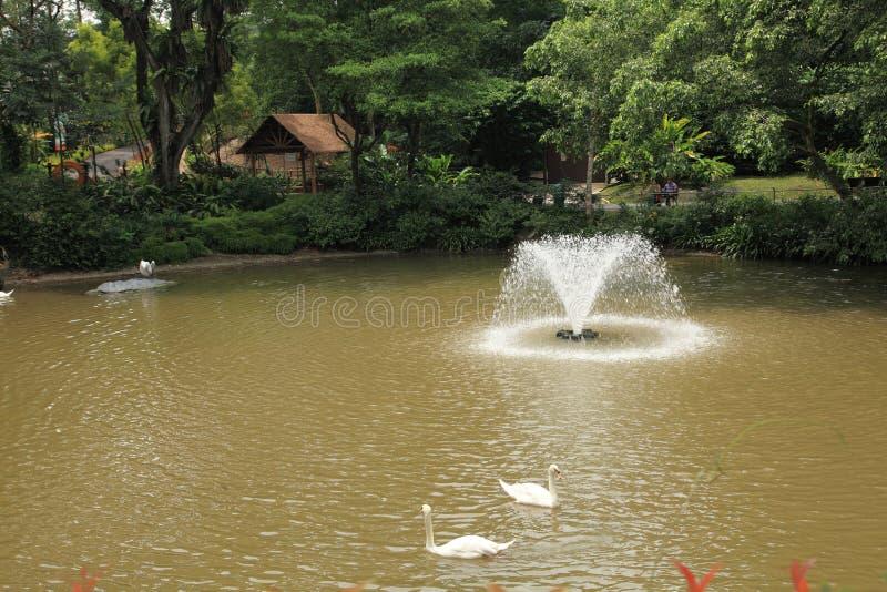 Parco dell'uccello di Jurong a Singapore immagini stock
