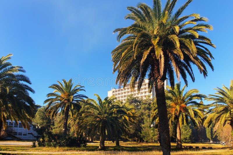 Parco della città con le palme fotografia stock libera da diritti