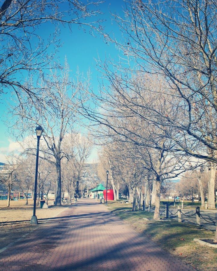 Parco della città il giorno freddo di febbraio in Kelowna, BC Canada L'albero allineato ha pavimentato la via ed il palo della lu fotografia stock