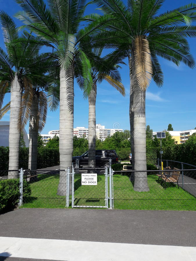 Parco della palma fotografia stock libera da diritti