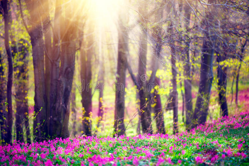 Parco della primavera con erba verde, i fiori selvaggi di fioritura e gli alberi fotografia stock libera da diritti