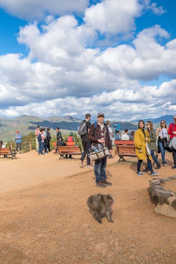 Parco della scimmia di Arashiyama a Kyoto, Giappone fotografia stock